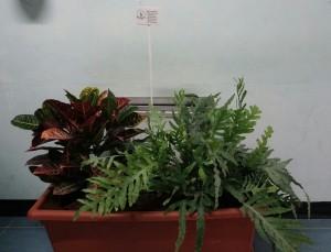 piante corridoio 1