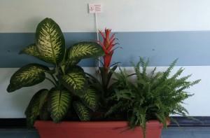 piante corridoio 2