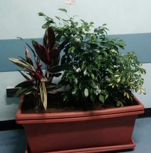piante corridoio 4